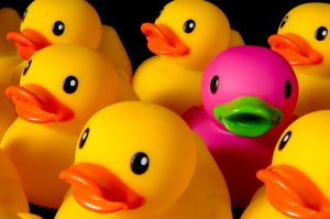 pink duck among yellow ducks
